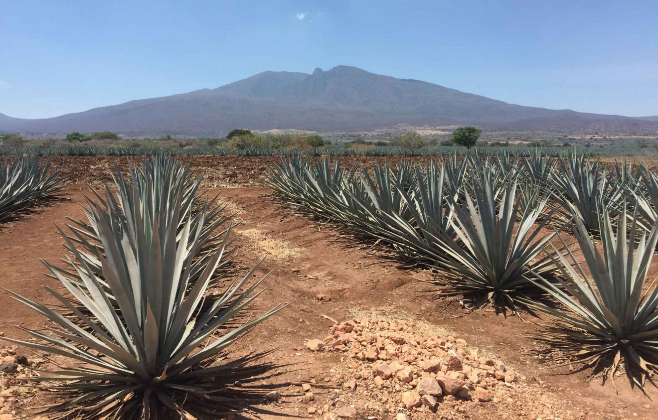 tour a tequila